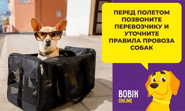 Перевозка собак в самолете: как выбрать переноску, правила провоза за границу, необходимые документы