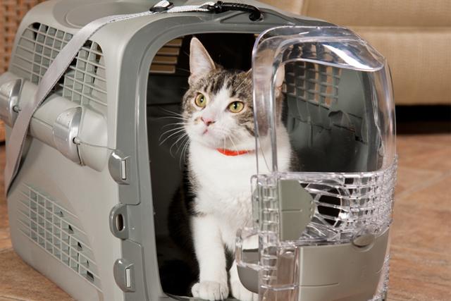 Как перевозить кошку в самолете: правила перевозки по России и миру, сколько стоит билет, как подготовить животное
